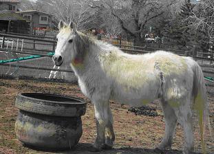 kissing spine hest
